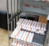 小竹向原 いさみや 卵